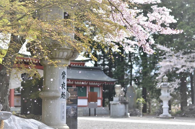 桜・・・見納めですね(#^^#)